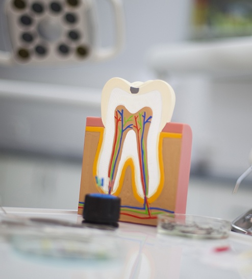 Model of the inside of a tooth